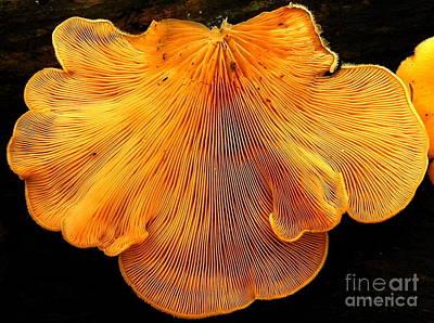 Orange Mock Oyster Poster