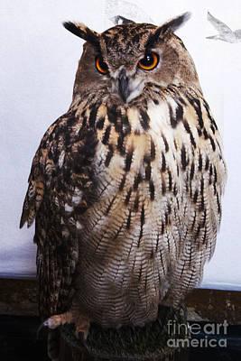 Orange Owl Eyes Poster