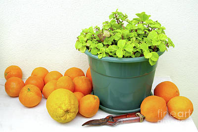 Oranges And Vase Poster