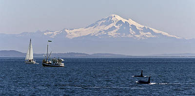 Orca's And Mt Baker Poster