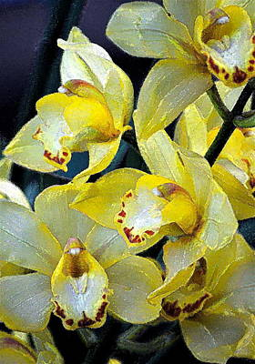 Orchid 6 Poster by Pamela Cooper