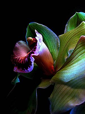 Orchid Gem Poster
