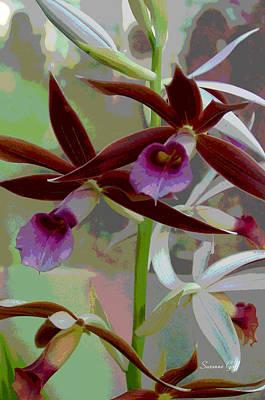 Orchid Sonata Poster