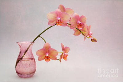Orchids In A Pink Vase Poster by Ann Garrett