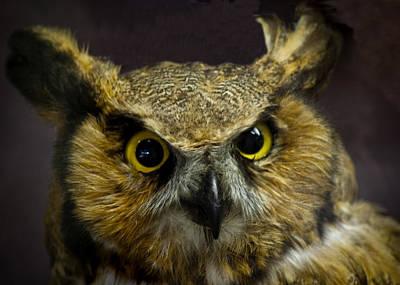 Owl At Seven Ponds Nature Center Poster
