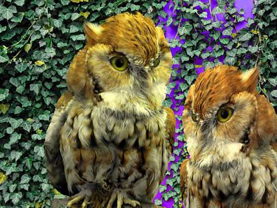 Owl Look Poster