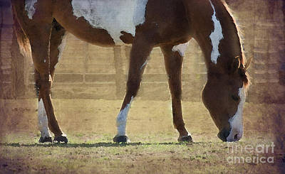 Paint Horse Poster by Betty LaRue