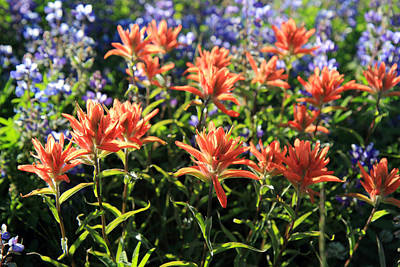 Paintbrushes Wildflowers Rainier National Park Poster by Pierre Leclerc Photography