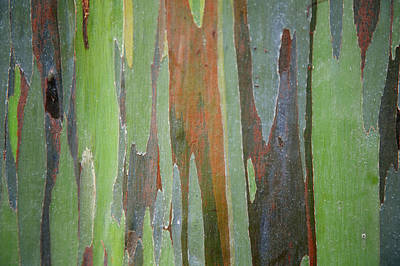 Painted Eucalyptus Tree Bark Poster by Jenna Szerlag