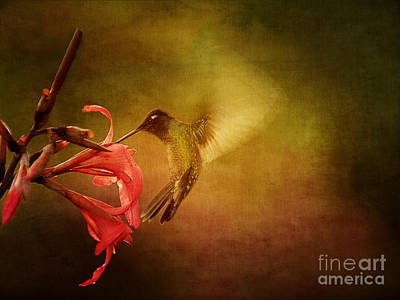Painterly Hummingbird #2 Poster by Anne Rodkin