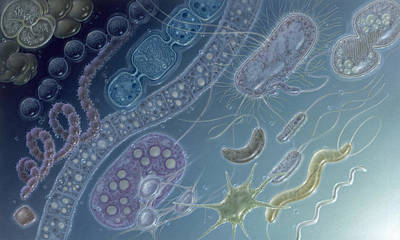 Painting Of 17 Types Of Bacteria Poster