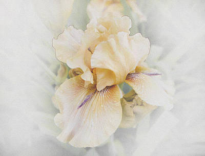 Pale Beauty Poster by Lynn Wohlers