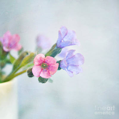 Pale Pink And Purple Pulmonaria Flowers Poster by Lyn Randle