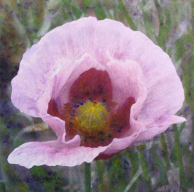 Poster featuring the painting Pale Pink  Poppy by Richard James Digance