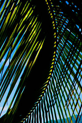 Palm Frond Curve Poster by Anthony Doudt