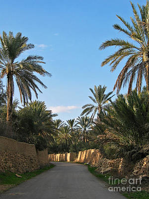 Palm Gardens In Palmyra Oasis Poster by Issam Hajjar