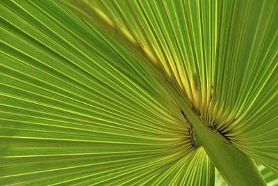 Poster featuring the photograph Palm Leaf II by JD Grimes