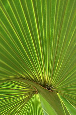 Poster featuring the photograph Palm Leaf by JD Grimes