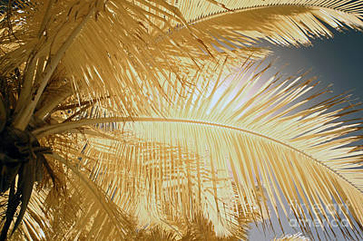 Palm Leaf Poster by Keith Kapple
