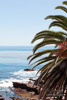 Palm Tree And Ocean Poster by Paul Velgos