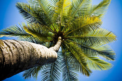 Palm Tree From Below Poster