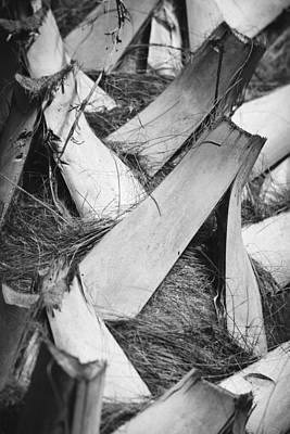 Palm Tree Macro Poster by Adam Romanowicz
