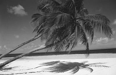 Palm Tree Shadow On Sand Poster by Anonymous