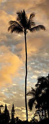 Palm Tree Sunset Hana Hawaii Poster by Dustin K Ryan