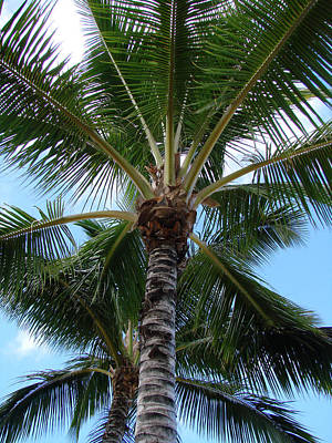 Poster featuring the photograph Palm Tree Umbrella by Athena Mckinzie