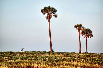Palm Trees And Heron Poster by Michael Thomas