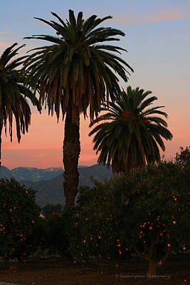 Palm Trees And Orange Trees Poster by Dorothy Cunningham