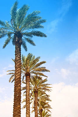 Palm Trees Poster by Susi Stroud