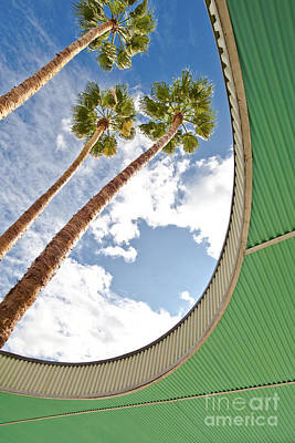 Palm Trees Through Architecture Poster by Eddy Joaquim