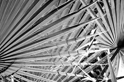 Palm Veils Poster