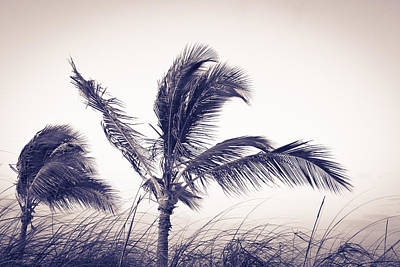 Palms 4 Poster