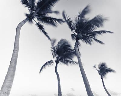 Palms 5 Poster