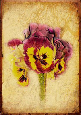 Pansy Poster by Margaret Hormann Bfa