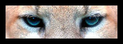 Panther Eyes Poster by Sumit Mehndiratta