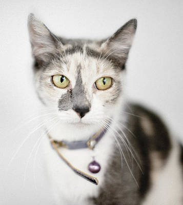 Pastel Calico Cat With Large Yellow Eyes Poster