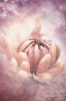 Pastel Flower Poster by Lee-Anne Rafferty-Evans