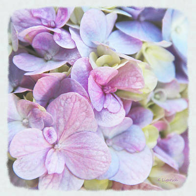 Poster featuring the photograph Pastel Hydrangeas - Square by Kerri Ligatich