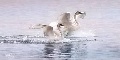 Pastel Swans Poster