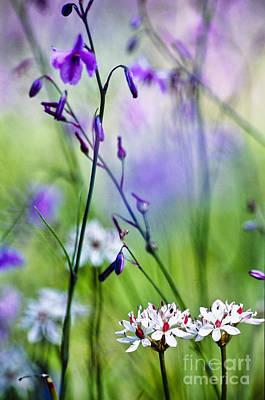 Pastel Wildflowers Poster