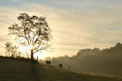 Poster featuring the photograph Pasture Sunrise by JD Grimes