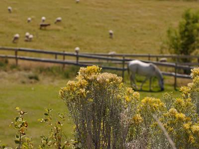 Pastures Poster