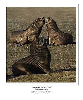 Patagonian Sea Lion Pups Poster by Owen Bell