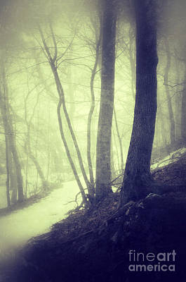Path Through Misty Snowy Woods Poster