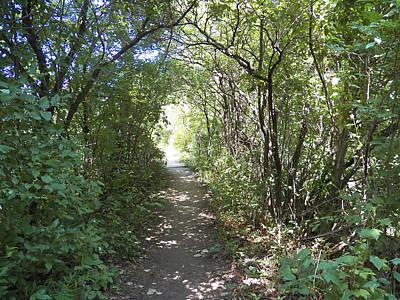 Path Through The Marsh Poster
