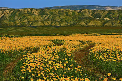 Path Through The Wildflowers Poster