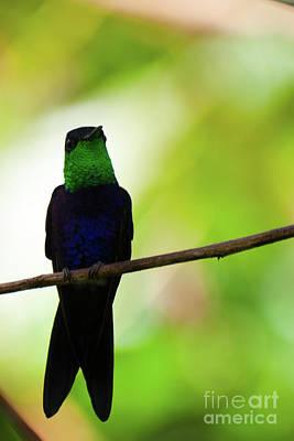 Patient Hummingbird Poster